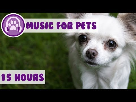 Relax My Chihuahua! The Perfect Music to Keep Your Chihuahua Calm and Tranquil! New Therapy Music!