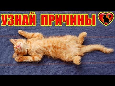 Вопрос: Почему кошки когда спят часто закрывают мордочку лапами?