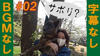 甲斐犬ハルヱと柴犬マメがいる何気ない日常ぉ=!【#02】