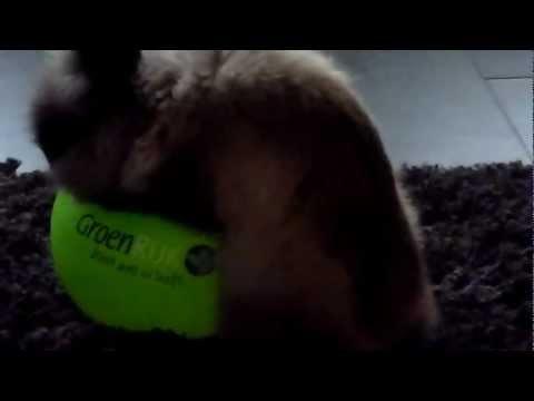 Konijn Fluffie 'speelt' met ballon