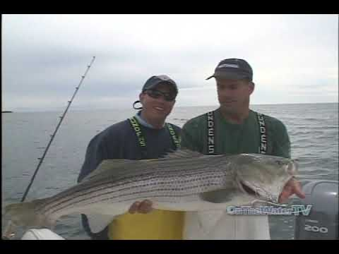 OTW Classics: Live Lining Pogies For Giant Stripers In Connecticut