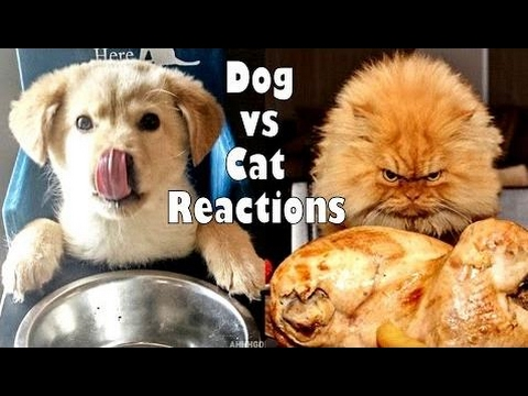 """an argument in favor of the debate that dogs are better than cats Why dogs are better than cats dogs are often called """"man's best friend"""" and make ideal argument 1 topic sentence debate follow up."""