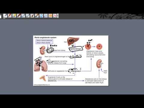 Angiotensin Receptor Blocker part 1  Hypertension
