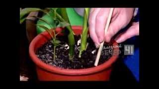 Уход за комнатными растениями зимой(, 2013-10-31T07:32:23.000Z)