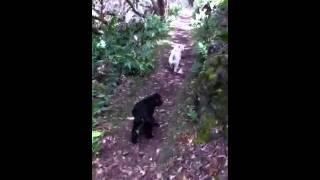 Kulioou Hike With Friends