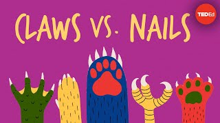 Claws vs. nails - Matthew Borths