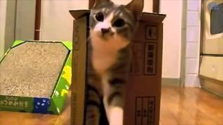 Videos Divertidos 2015 Gatos y Cajas - Funny Videos 2015 Cats and Boxes