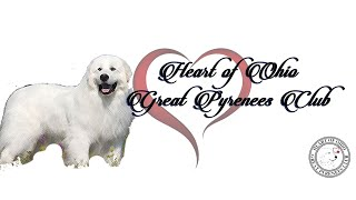 Grooming The Great Pyrenees