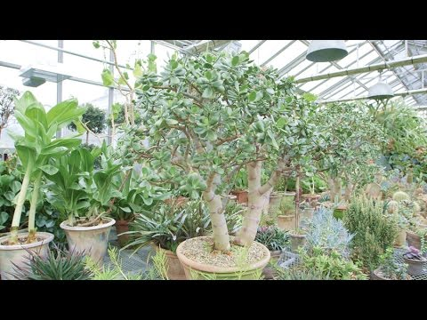 Go Out & About at Martha's Conservatory Greenhouse - Martha Stewart