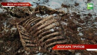 Жители совхоза «Татарстан» Тукаевского района натолкнулись на зловонные трупы животных и мусора