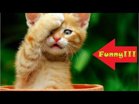 Funny cat 2015