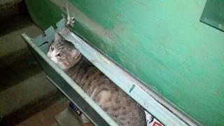 Кот разговаривает - говорит отстань, дай пройти, кот нормально идёт домой. VivaVideo