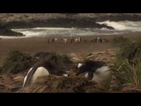 Antarctica Travel Centre  Falkland Islands 2mins