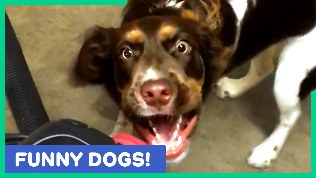FUNNY DOG VIDEOS TO END YOUR FEBRUARY WITH A LAUGH!