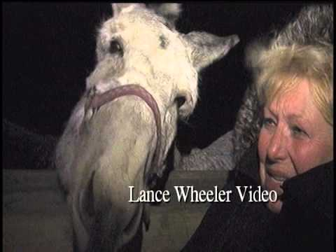 Long Eared Donkeys Love This Weather- Lance Wheeler Video