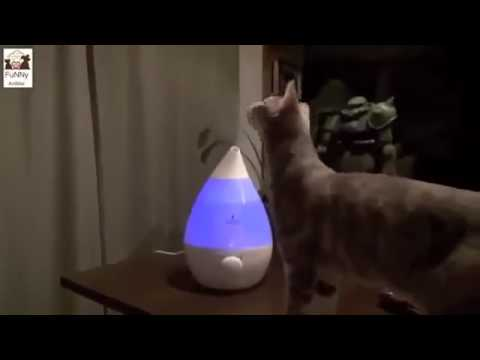 funny cat pranks videos  funny cat reaction to fart  that will make you laugh so hard you cry