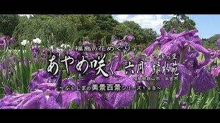 福島の花めぐりより ~四季の里 緑水苑のアヤメ~