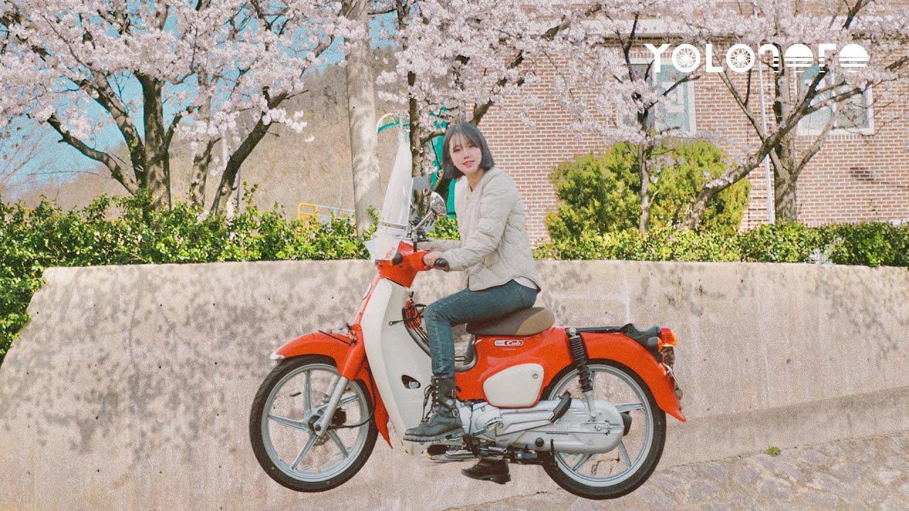 슈퍼커브와 벚꽃라이딩, 뜻밖의 인생카페에서의 마음고백|원주터득골북샵|바이크오토바이|욜로졸로라이딩