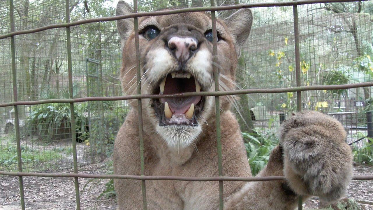 interpreting cat behavior