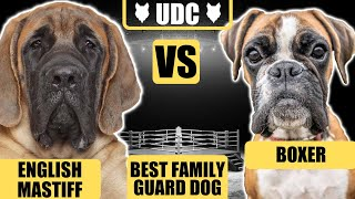 ENGLISH MASTIFF VS BOXER! Which Is The Ultimate Family Guard Dog Breed!?!