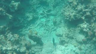 Grand Turk Snorkeling From the Carnival Vista, September 2018