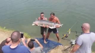 Супер Рыбалка Бешеный Улов Огромная Рыба Осётр 65 кг 1.5 м