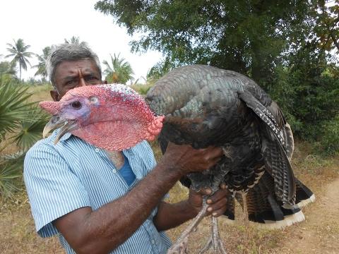 Cooking Full Turkey Biryani in My Village - My Village Food