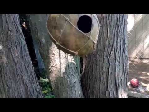 How To Make Gourd Birdhouse