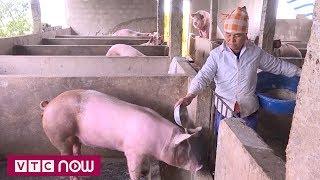 Bình ổn giá thịt lợn: Không chỉ trông chờ việc hạ giá