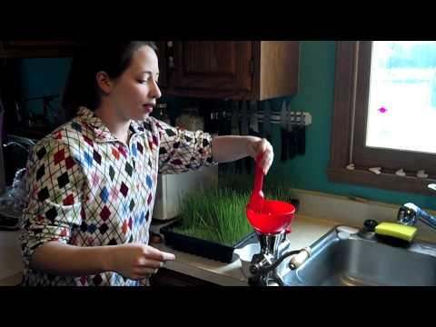 Making Wheat Grass Juice