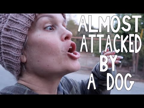 ALMOST ATTACKED BY A DOG : VLOG 158