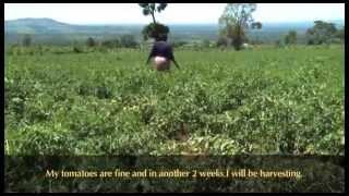 Indigenous Vegetable Farming