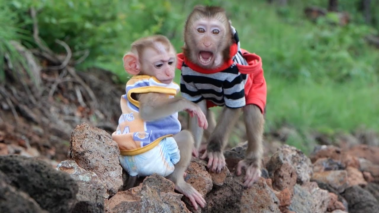 Smart Monkey Bono & GG Go Outside With Dad