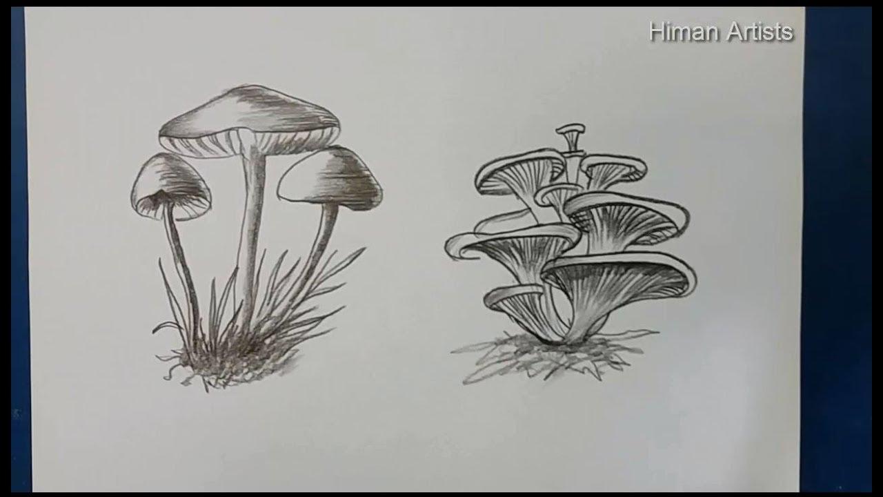 Mushroom Drawing step by step    How to Draw Mushroom two item