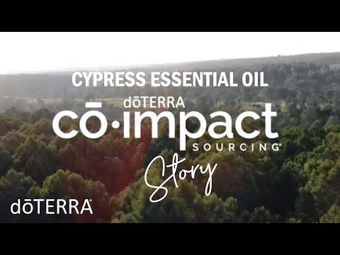 cypress-essential-oil-doterra-sourcing-story