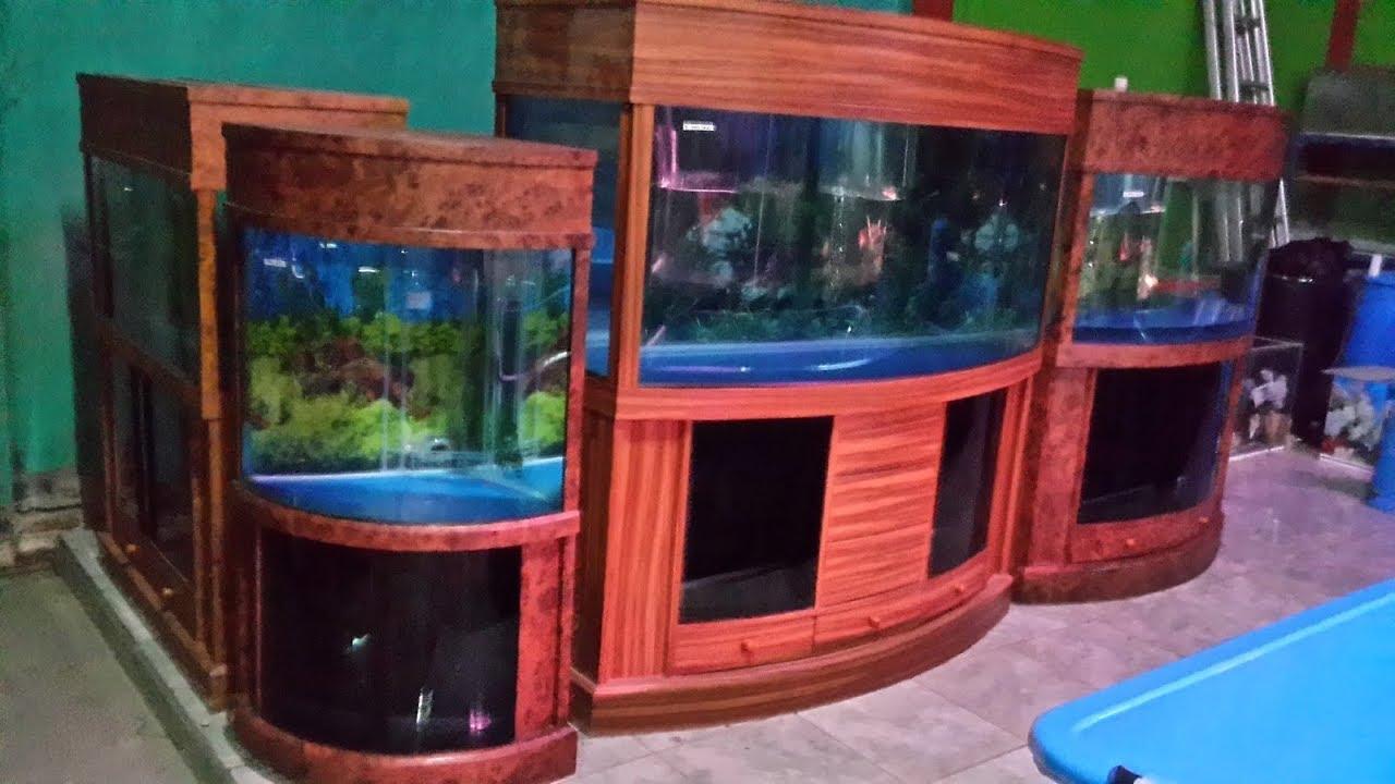 Duta Jaya Aquarium Toko Ikan Hias Terbesar Dan Terlengkap