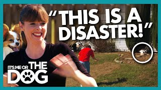 'Disaster' Declared as Dogs Run Away During Training! | It's Me or The Dog