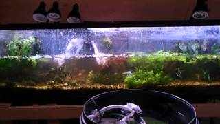 How To: Turn Plants Red, Fluval Iron