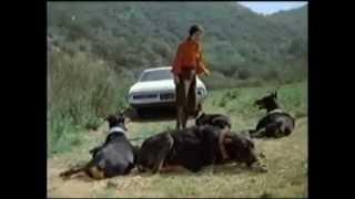 Dobermans In Movie -- 21 (part 4) -- Доберманы в кино