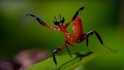 Kung Fu Mantis Vs Jumping Spider | Life Story | BBC