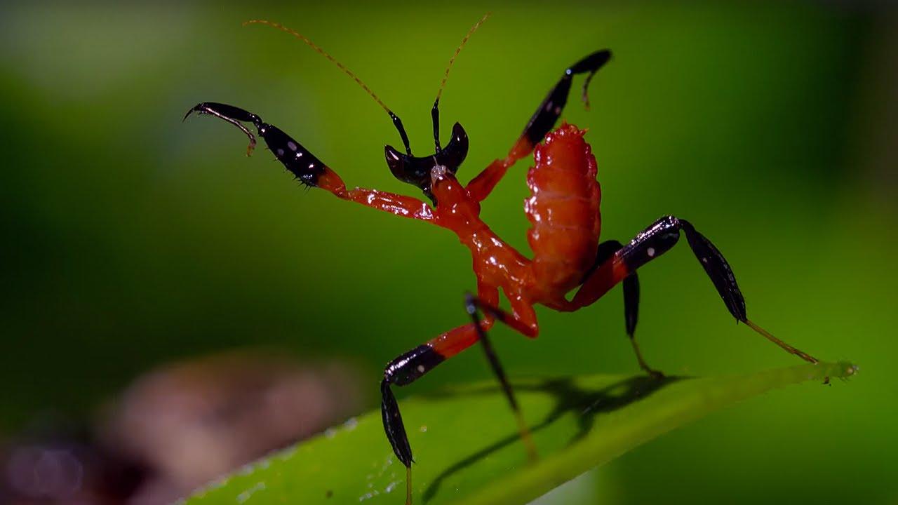 Image result for kung fu mantis