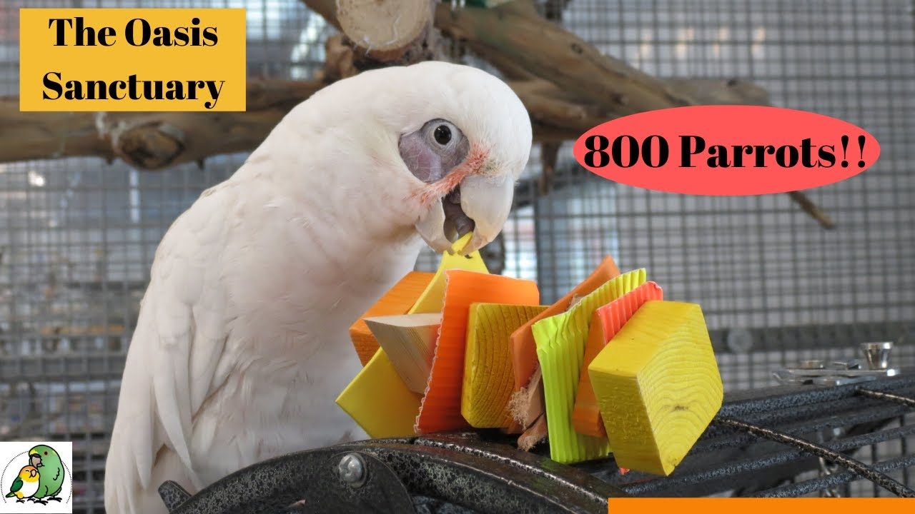 ONE OF THE LARGEST PARROT  SANCTUARIES IN THE WORLD Receives Bird Toys | The Oasis Sanctuary
