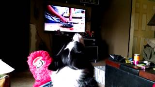 Dog reacts to his favorite commercial