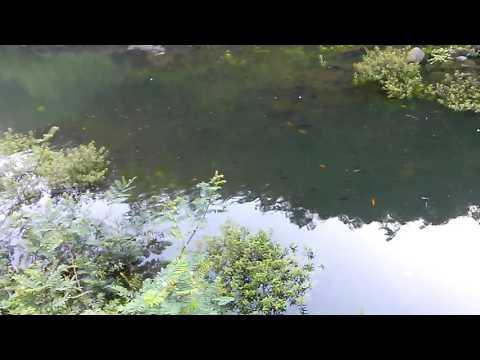 Area de pesca en el lago caonillas puerto rico