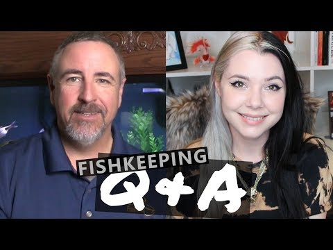4 Fishkeepers in 1 LIVE Video?!