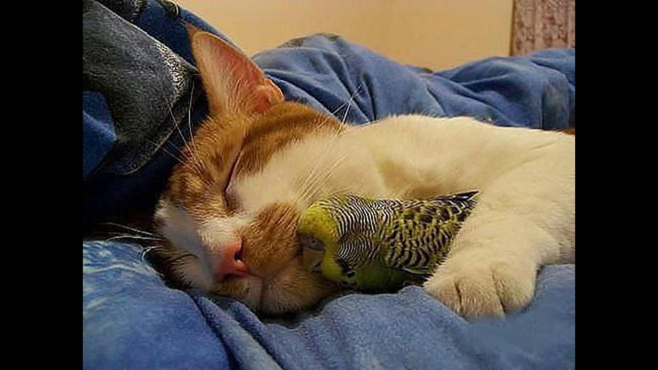 Животные-друзья.