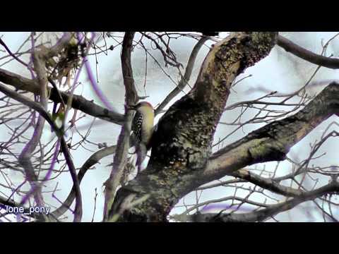 New Jersey Birds, November 2011, in HD