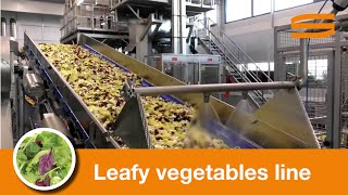leafy vegetables processing line