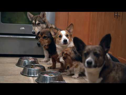 Thanksgiving Feast For Dogs (Raw Feeding Guide For Dogs 2)