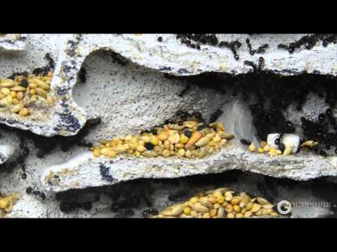 Inside ant colony